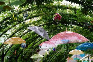 雨の写真・画像素材[2241072]
