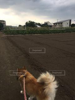 犬の写真・画像素材[319145]