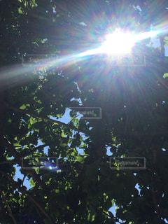 日差しの写真・画像素材[522446]
