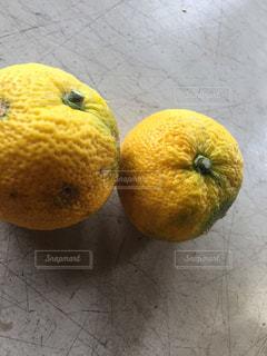 傷だらけの柚子の写真・画像素材[1563740]