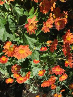 花のアップの写真・画像素材[1619490]