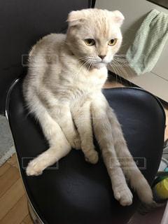 椅子に座って猫の写真・画像素材[937139]