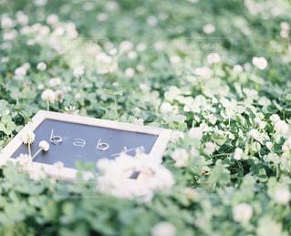 フラワー ガーデンの写真・画像素材[937532]