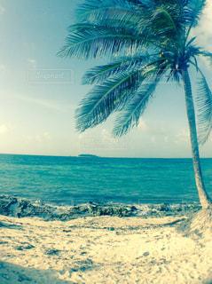 ヤシの木とビーチの写真・画像素材[938597]