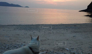 ビーチに座っている犬の写真・画像素材[938713]