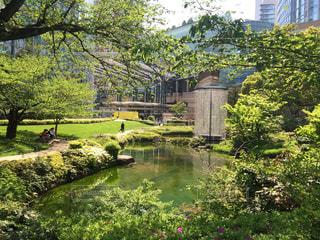 水の庭の写真・画像素材[938714]