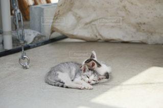 地面に横になっている猫の写真・画像素材[983885]