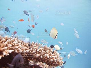 水中の魚の群れの写真・画像素材[985130]