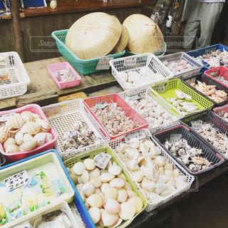 さまざまな貝の写真・画像素材[939079]