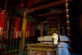 神社の賽銭箱の上にいるねこの写真・画像素材[939087]