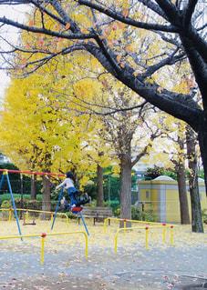 ブランコに乗る少女と秋の公園の写真・画像素材[939091]