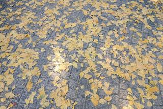 落ち葉の絨毯の写真・画像素材[939096]