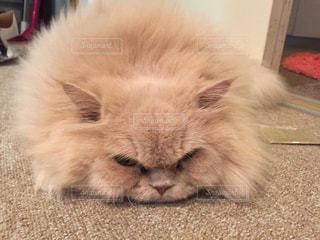 猫の写真・画像素材[235591]