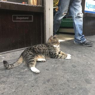 地面に横になっている猫の写真・画像素材[939341]
