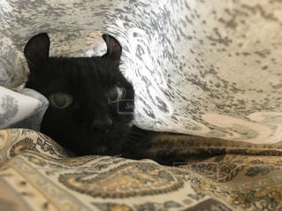 猫は布の下が好き - No.1008307