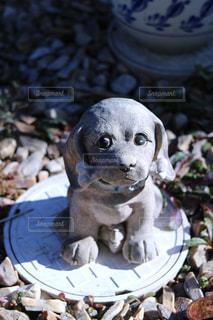 岩の上に座っている犬の写真・画像素材[943505]