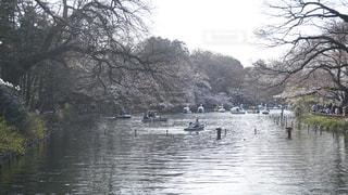 井の頭公園の写真・画像素材[958078]