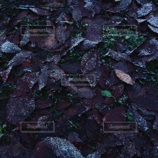 冬の落ち葉の写真・画像素材[939484]