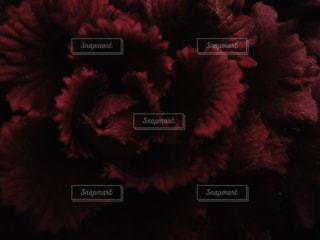 薔薇の写真・画像素材[939825]