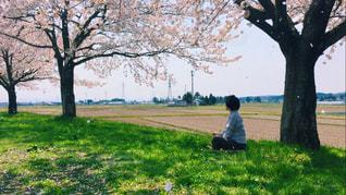 花見 - No.944208