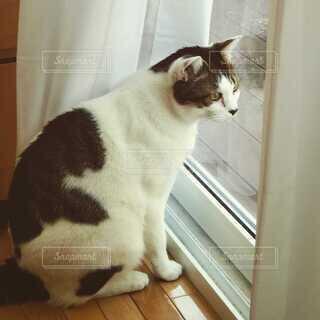 外を見ている猫の写真・画像素材[4746355]