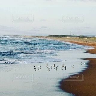 砂浜と海と鳥の写真・画像素材[4746363]