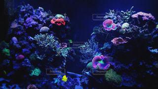 サンゴの水槽の写真・画像素材[939527]