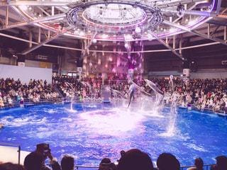 イルカのショーの写真・画像素材[939546]