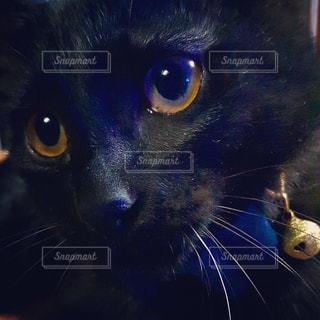 黒猫の写真・画像素材[946202]