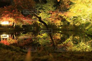 夜の紅葉 in京都の写真・画像素材[941438]