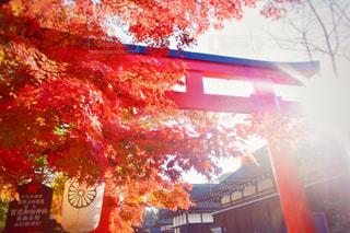 下鴨神社の写真・画像素材[940638]