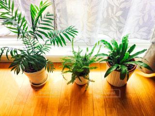 床の観葉植物の写真・画像素材[942076]
