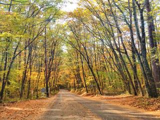 長野の林道の写真・画像素材[958901]