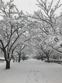 雪景色の写真・画像素材[975936]