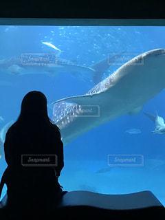 水の中を泳ぐ鳥の写真・画像素材[3590447]