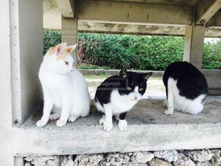 白い建物の前に座っている猫の写真・画像素材[959333]