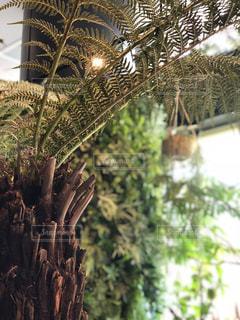 ジャングル風カフェの写真・画像素材[1061457]