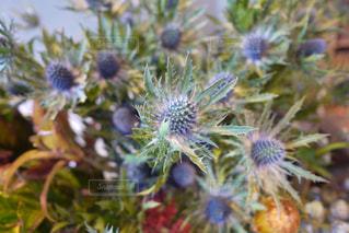 近くの花のアップの写真・画像素材[1219839]