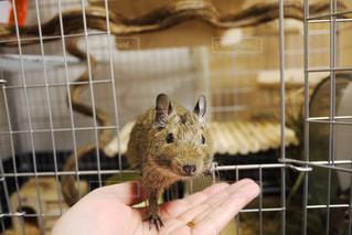 檻の中の齧歯動物の写真・画像素材[1222010]