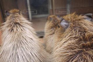 近くに動物のアップの写真・画像素材[1503698]