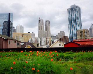 赤い花と都庁の写真・画像素材[940245]