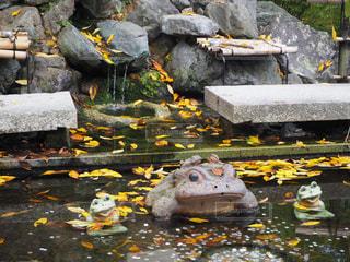 池のカエルの写真・画像素材[940305]