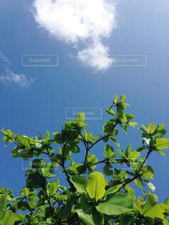 お天気日和の写真・画像素材[957284]