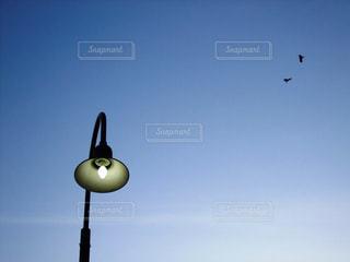 夕暮れのライトと鳥たちの写真・画像素材[957336]
