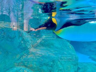 ペンギン。の写真・画像素材[941482]