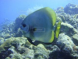 水面下を泳ぐ魚たちの写真・画像素材[942482]