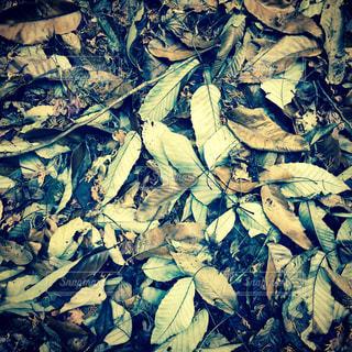 近くの木のアップの写真・画像素材[941235]
