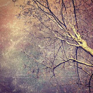 近くの木のアップの写真・画像素材[959507]
