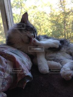 ベッドの上で横になっている猫の写真・画像素材[942192]