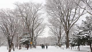 北海道大学の冬休みの写真・画像素材[941340]